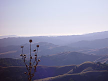 Weed and Vista, Mission Peak, California